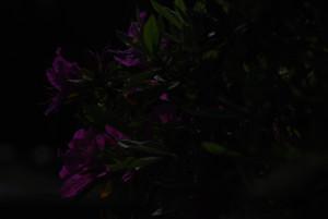 Dsc_9384_mini